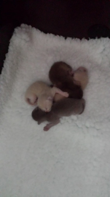 What a little bundle of kittens (01:10:2