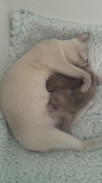 1 week old today (29:09:2014).jpg
