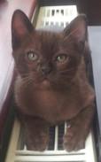 How handsome is Stanley(13:11:2012).jpg