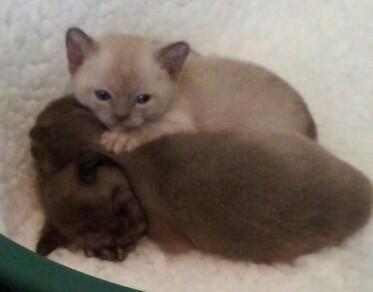 Lily is top kitten (11:10:2012).jpg