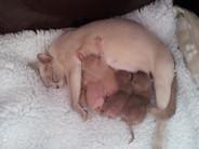 Maeva and babies (16:04:2013).jpg