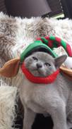 Edgar the Elf! (05:12:2014).jpg