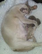Maeva and new born kittens (07:04:2013.j