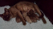 Eevee and kittens(03:12:2013).jpg