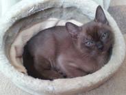 Ollie(09:11:2012).jpg