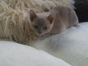 Lou Lou at 8 weeks(12:11:2011).jpg