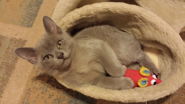 Edgar with his friend the mouse! (07:12:
