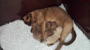We love our Mum! (08:12:2013).jpg