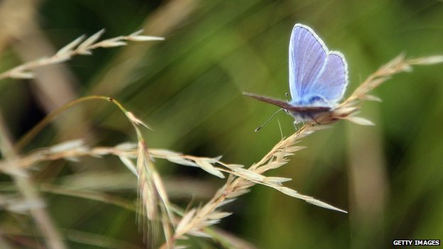 mariposa 6a jornada