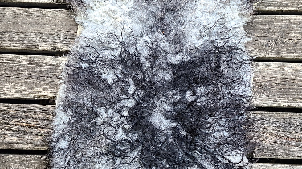 Small Grey and Charcoal Icelandic skin
