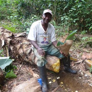 Opvangen sap palmboom voor palmwijn.JPG