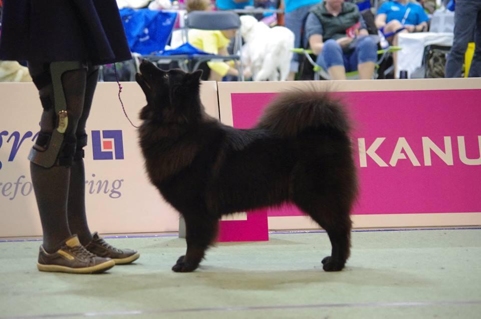 European DogShow 2015