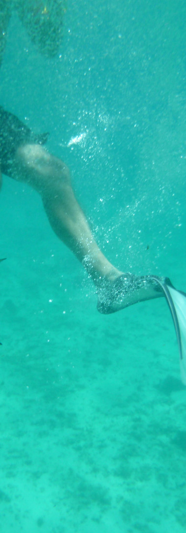 Nager avec les poissons - Snorkelling