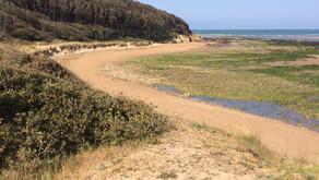 Yeuses : pour un classement au patrimoine naturel de la forêt littorale