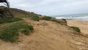 L'actualité de la dune de la plage de la Mine - juillet 2021