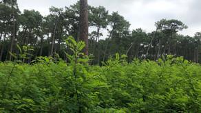 Site classé ou Site Perdu ? Sables de la Grange, accès Four à Chaux– Juillet 2021