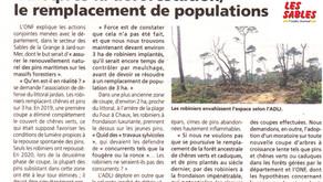 Pour un moratoire sur les coupes : lorsque la forêt ancestrale disparaît...