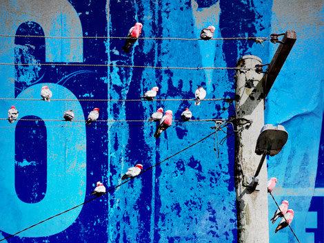 Art Lab, Birds on Wire
