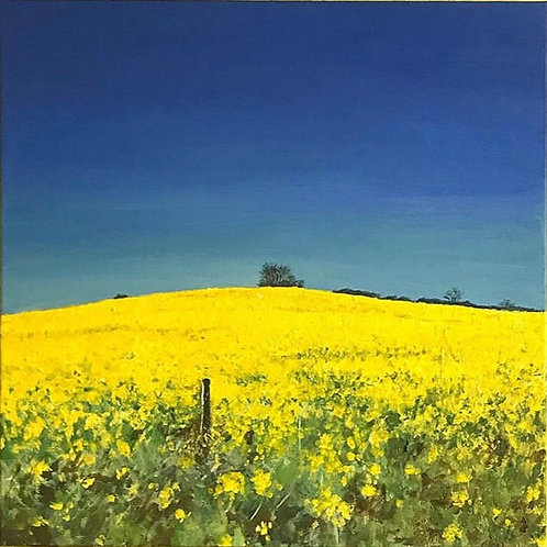Yellow field (Large)
