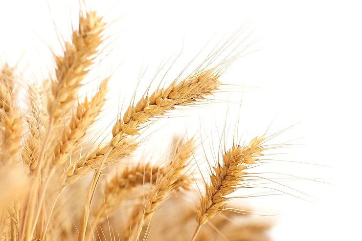 wheat-2679158_1920.jpg
