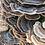Thumbnail: 2021 Myco Mindful Gardening - Oct. 17