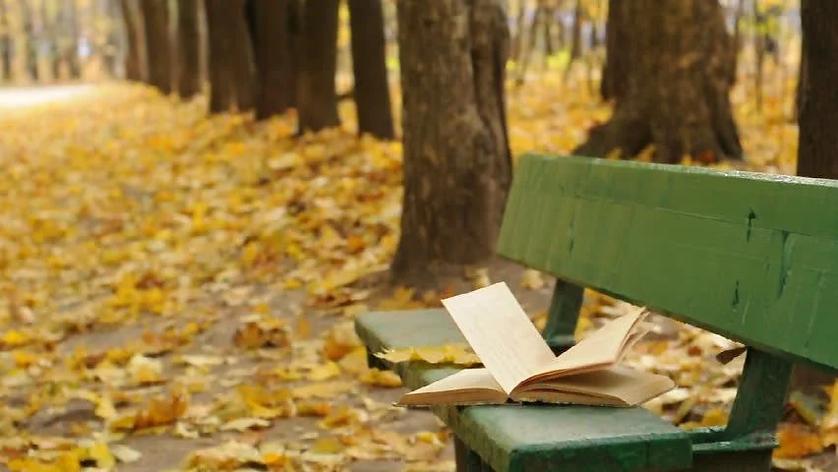 libro e panchina.jpg