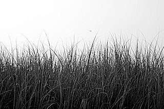 Black/White Acrylic Mount Photograph No. 4 by Janet Cass