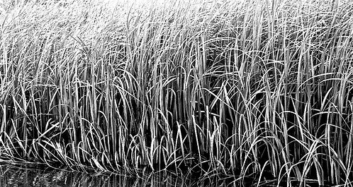 Black/White Acrylic Mount Photograph No. 7 by Janet Cass