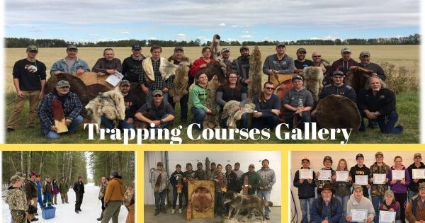 Trapping Courses Gallery Alberta Trapper