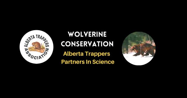 ATA Wolverine Conservation