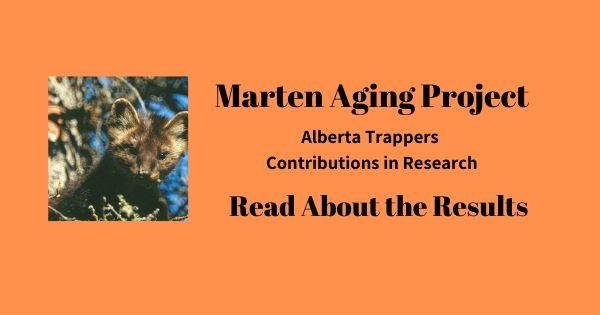 Marten Project Alberta Trappers Associat