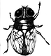 House Fly in Ink.png