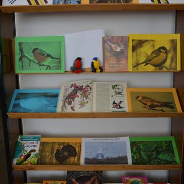 Выставка о птицах