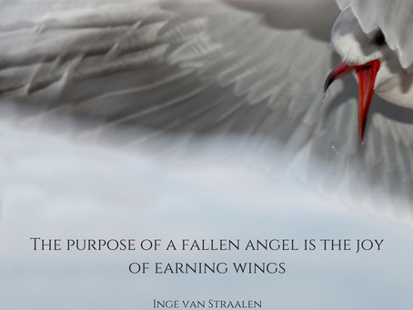 Earning wings