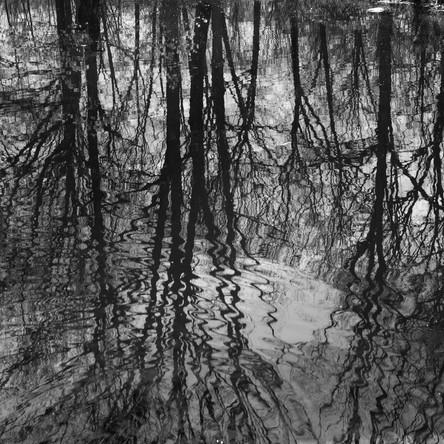 Nature-6.jpg