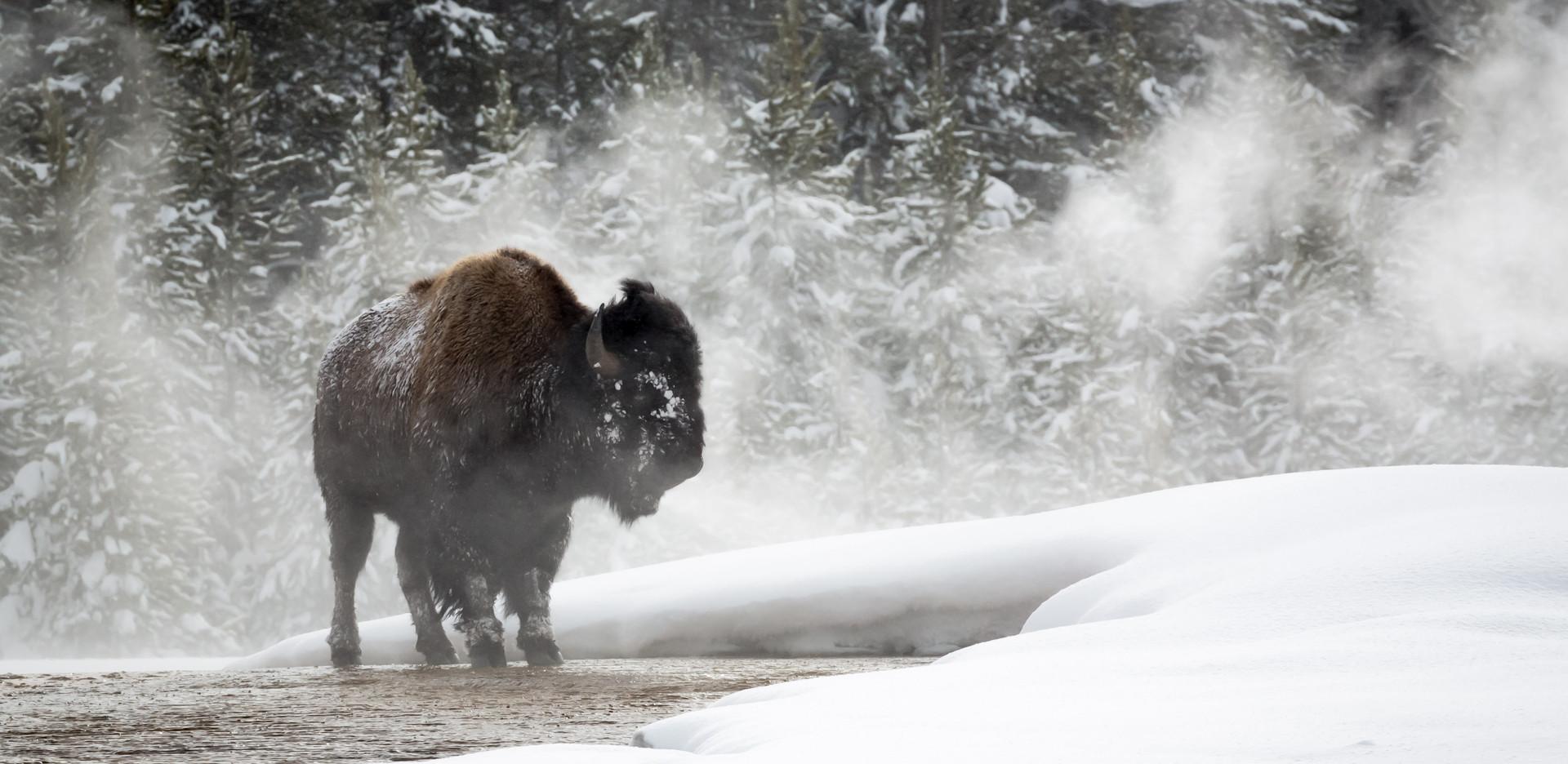 20170110_Yellowstone2_00607.jpg