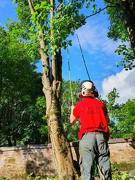 Lowland trees brand team work-min.jpg