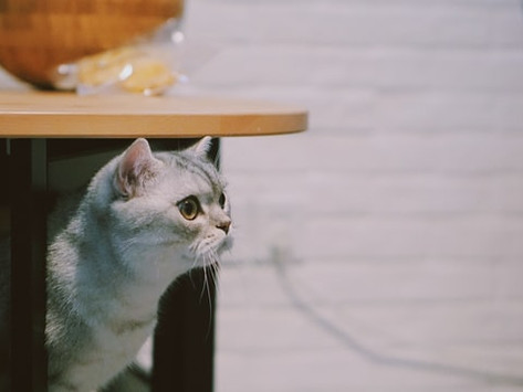 What Curiosity Really Did to the Cat
