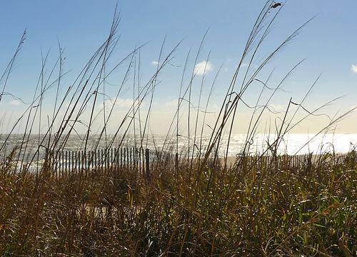 1102 palmetto Edisto Beach