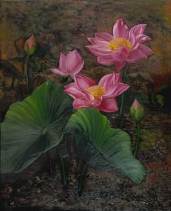 Warm Lotus Series IV