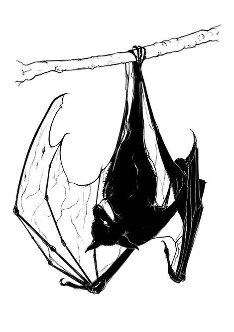 The Bat  -  A4 / A3 print