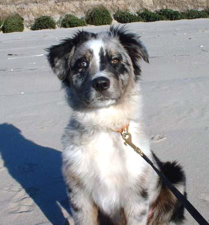 Nisa at 16 weeks