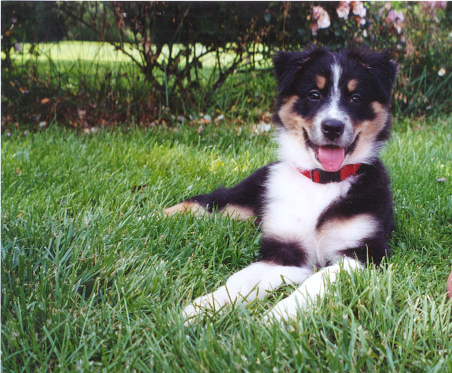 Lucy as a puppy