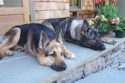 Mischa and Finn