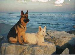 Martha and Bella at Sunset