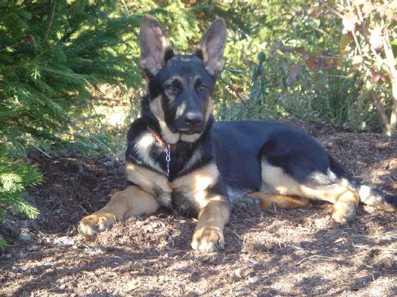 Sonya at 4-5 months