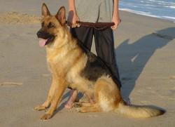 Quinna at the Beach