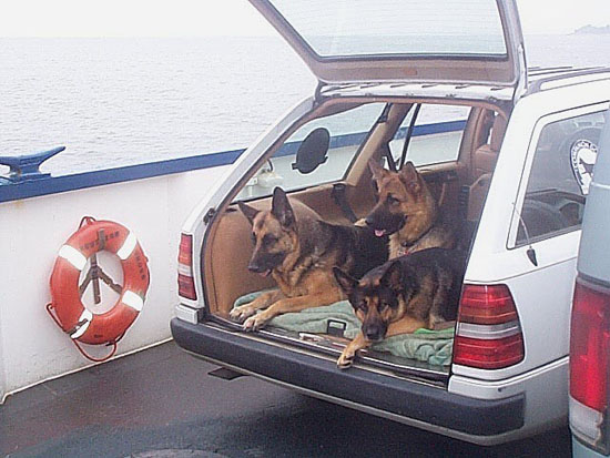 3 Dogs on the Ferry