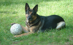Esther and her Ball