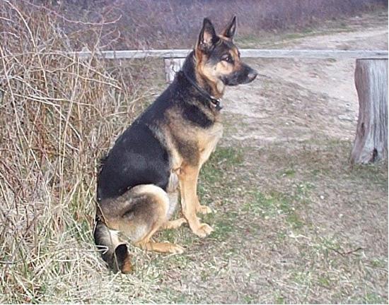 Just looking at my dog